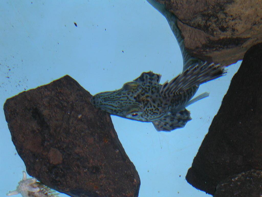 Alan in antarctica for Fresh fish online